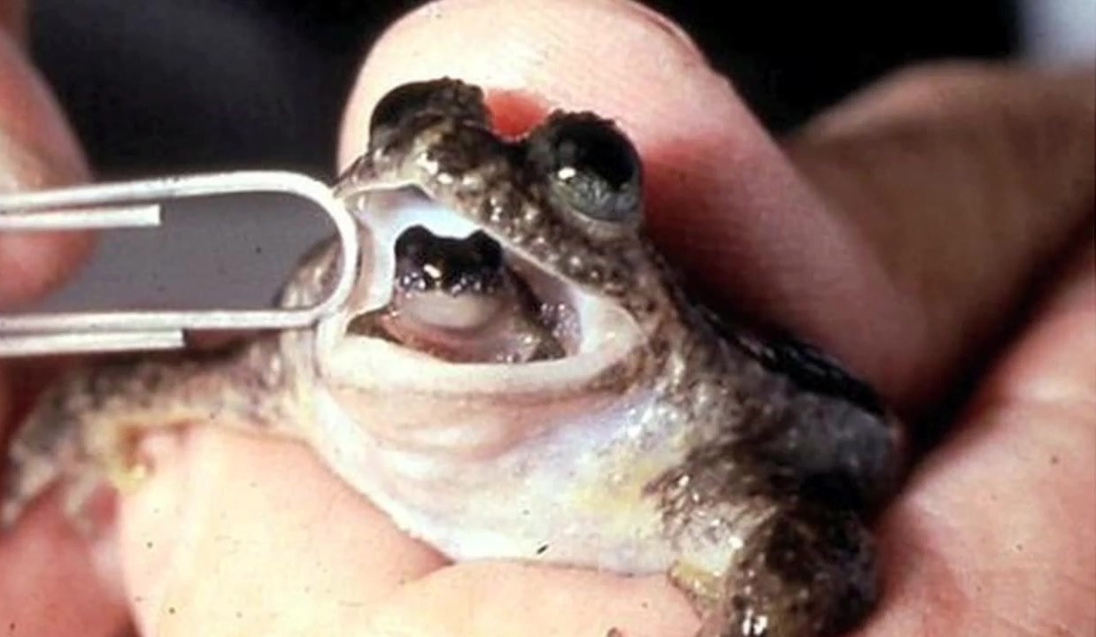 frog birth form mouth