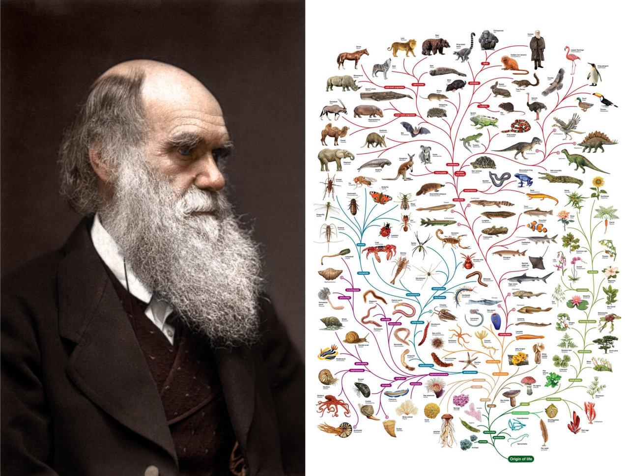 drawin and evolution